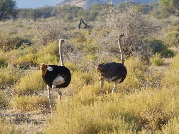 Kalahari Spa Day Pass